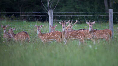 oak creek ranch fawns are the future for hunting