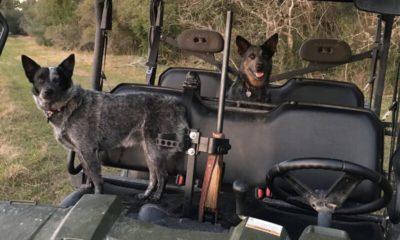 Oak Creek Ranch Dogs 2 Glry