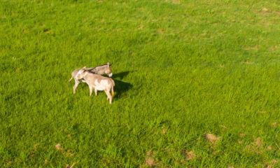 Oak Creek Ranch Donkeys Glry
