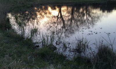 Oak Creek Ranch Pond Glry